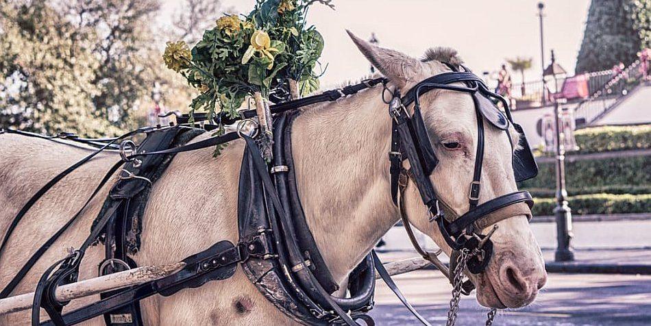 Pferd vor einer Kutsche